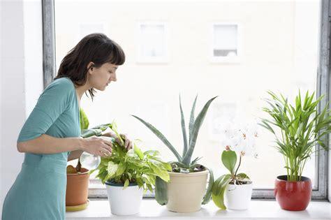 algemene verzorgingstips voor je plant mooi wat planten doen
