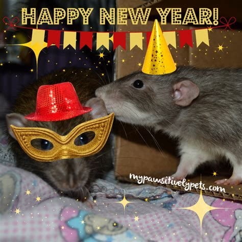 new year what does rat happy new year pawsitively pets