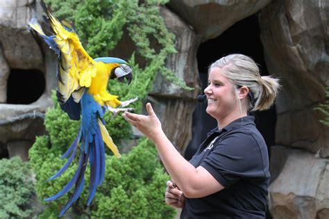 bird show the cincinnati zoo botanical garden