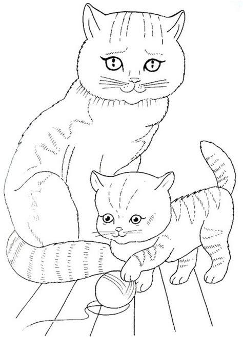 фото кошка бесхвостая