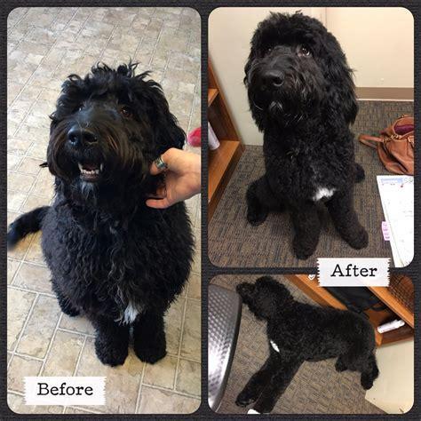 groovy grooming pet cuts 16 reviews pet groomers
