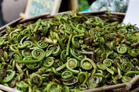 Smart Kitchen Ideas by Blink And You Might Miss Your Chance For Fiddlehead Ferns