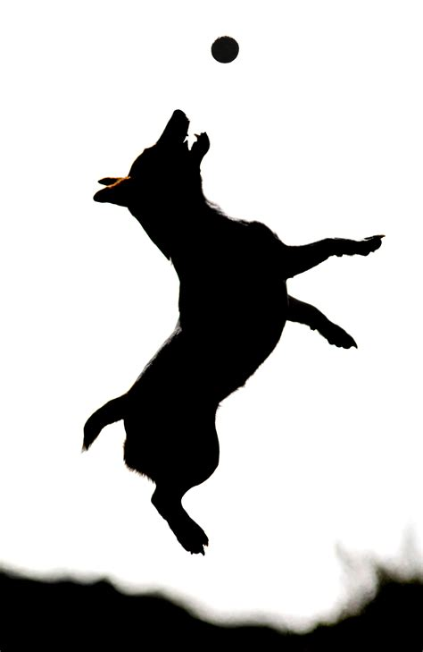 jack russell tattoo designs clipart at getdrawings free for personal use