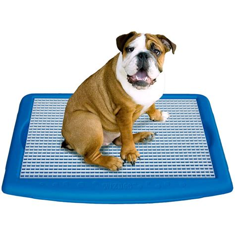 boxer puppy potty wizdog indoor potty litter box potty dogs