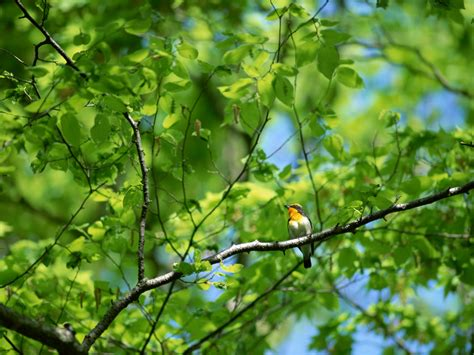 bird on a branch of a tree japanese photolog