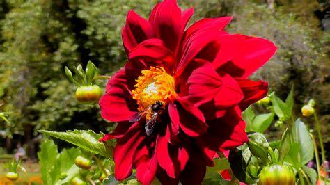 flowers bloom in spring season in nuwara eliya