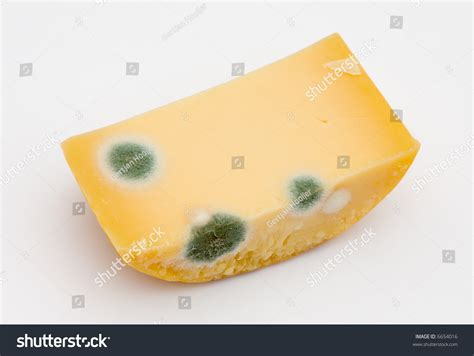 the cheese is old and moldy where is the bathroom mold on cheese stock photo 6654016 shutterstock