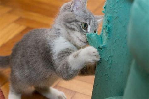 divano gatto come impedire a e gatto di graffiare i mobili