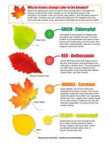 why leaves change color why do leaves change color in the fall sciencebob