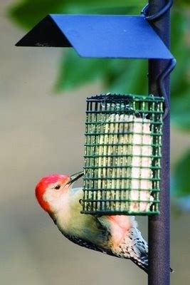 what do backyard birds eat 1000 images about backyard birds on pinterest