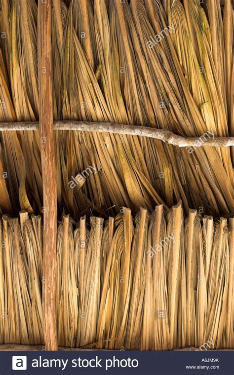 palm thatch roof stock photo 11591214 alamy