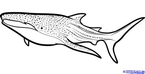 Whale Shark Coloring Page whale shark clipart clipartsgram