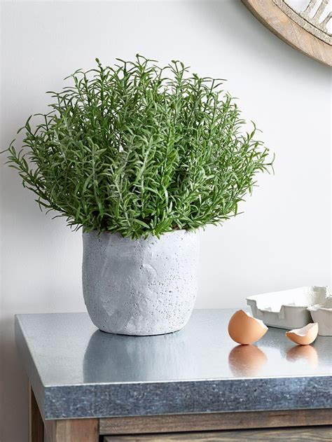potted   stylish grey stone effect concrete pot