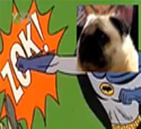 pug says batman image 60743 pug says batman your meme