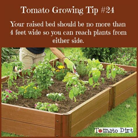 starting a raised bed vegetable garden tomato dirt 119 3 tips for starting a vegetable garden