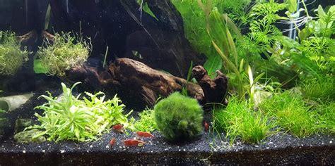 aquarium len garnelenaquarium infos zur einrichtung und haltung