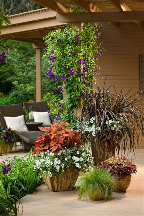 Best Plants For Planters Sun by Annual Flowers For Containers In Sun Or Shade Bradford