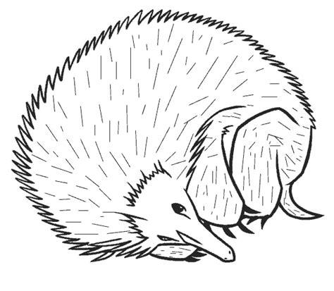 imagenes de animales omnivoros para colorear imagen zone gt dibujos para colorear gt animales erizos erizo 03