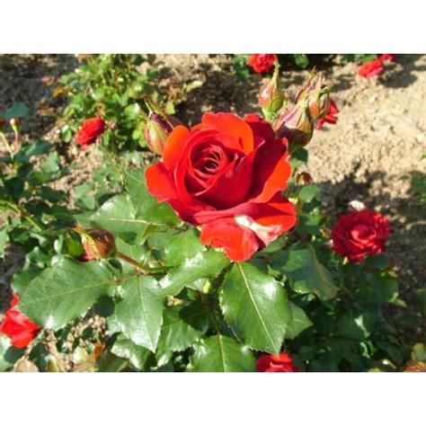 Bibit Bunga bibit bunga benih lazada indonesia
