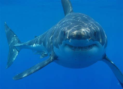 boy attacked  shark  south carolina coast  attack