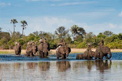 boat back to africa african safari at abu c okavango delta elephant