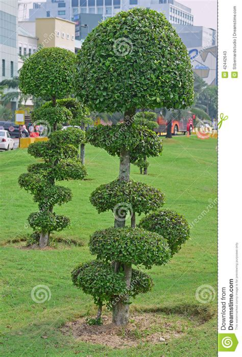 fancy shaped decorative trees with button like