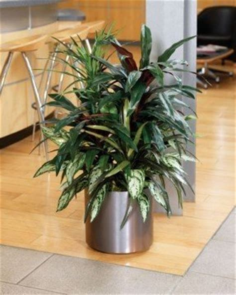 Floor Planters Indoor by Silk Floor Plants Foter