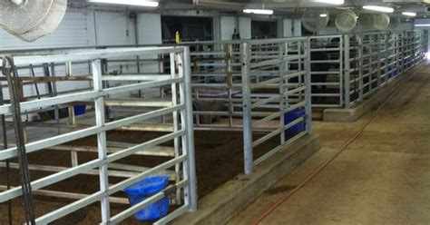 cattle cool room show cattle barns search show cattle a cow thermostats and search