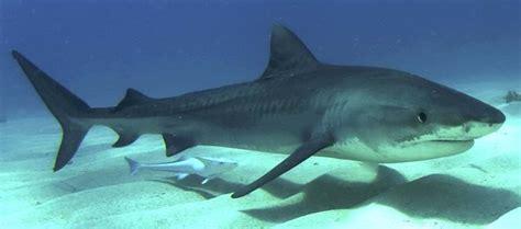 donde viven los tiburones dondevivennet