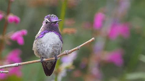 hummingbird gif