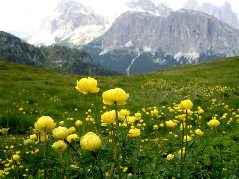 Flower Mountain photos of nature photos of mountain flowers