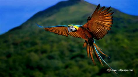 wallpaper birds amazing birds 17 jpg