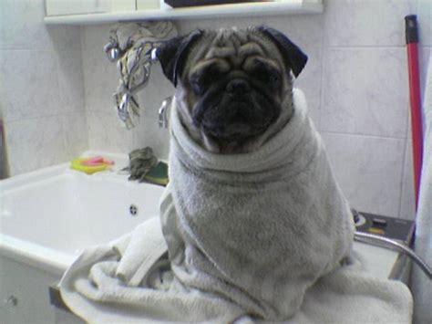 bellezza al bagno petpassion