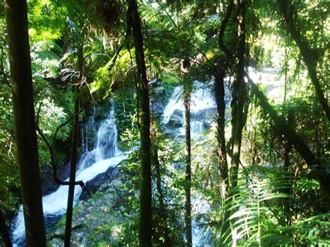 Green Mountains Section Lamington National Park Brisbane