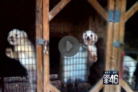 puppy mills in ga puppy mill raid leaves 357 dogs in rescue the dogington post