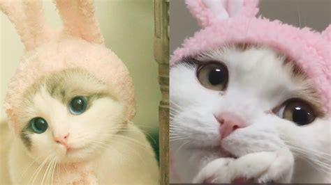 funny cute cat compilation   cute cat youtube