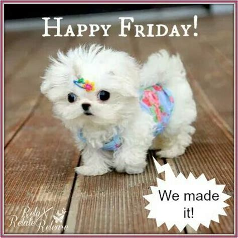 Happy Friday Meme - best 20 happy friday meme ideas on pinterest its friday