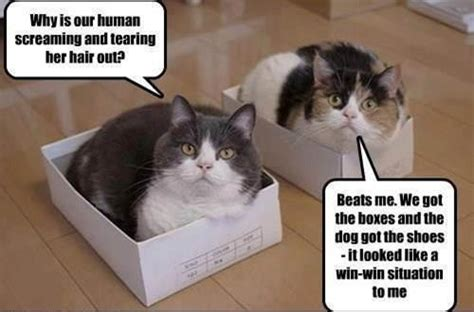 funny cat in shoes cat dog win win meme funny joke pictures