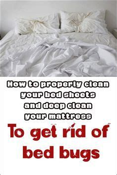 how to clean bed bugs best 25 bed bugs ideas on pinterest