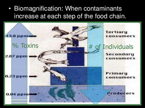 biological magnification and bioaccumulation worksheet answers biomagnification and bioaccumulation lesson powerpoint food chain p