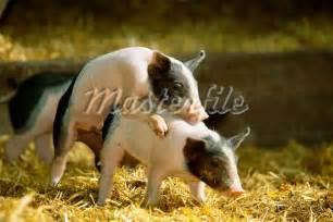 Animal Matting by Animal Mating Driverlayer Search Engine