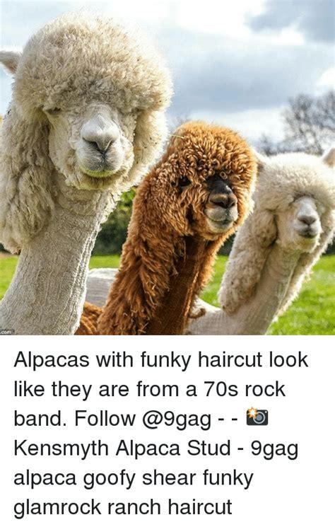 Alpaca Sheep Meme - 25 best memes about alpacas alpacas memes