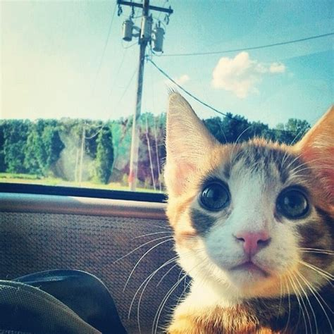 cat instagram pin by cats of instagram on the instagram feed