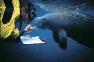 Requirements To Be A Zoologist by Stemsubjects Zoologist
