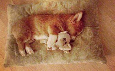 imagenes animales durmiendo 20 fotos de animales durmiendo a pierna suelta