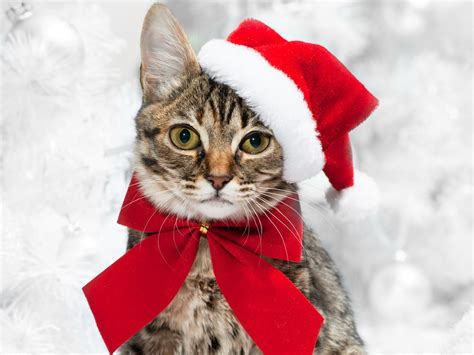 new year animals wallpapers cats new year glance bowknot animals