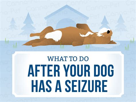 what to do after your has a seizure what to do after your has a seizure canna pet