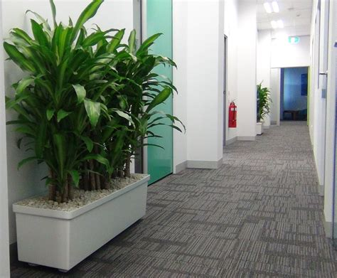 Indoor Floor Planters by Happy Plants In 1200 Planter Box Gaddys Plant Hire