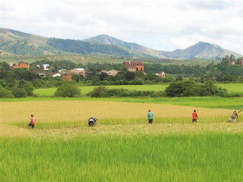 Sprei Madagascar l asia expo e la coltivazione riso
