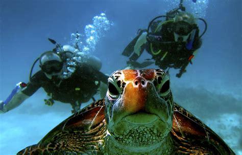 the dive roatan scuba diving infinity bay